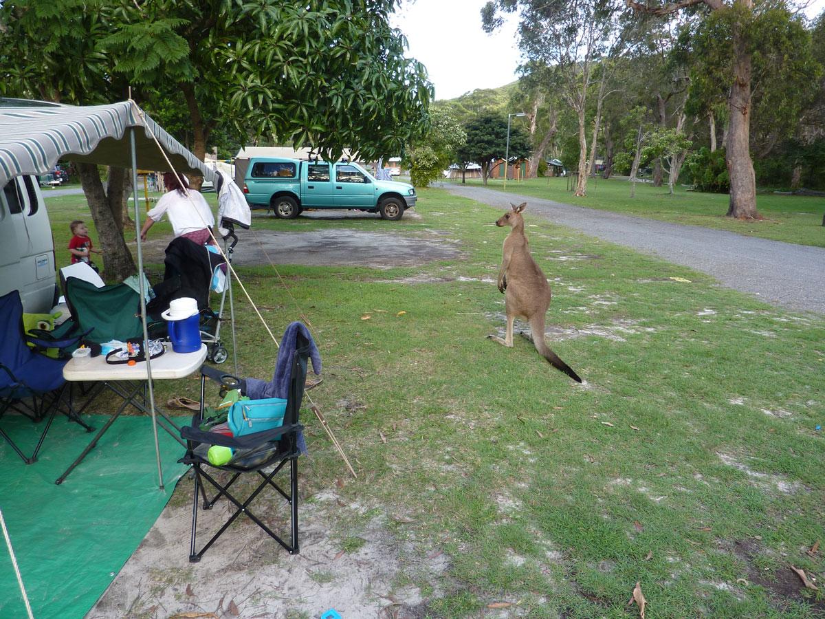 Gallery Calypso Campervans Campervan Rentals Five